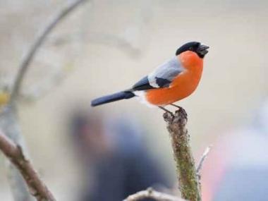 Fototapety ZWIERZĘTA ptaki 7967