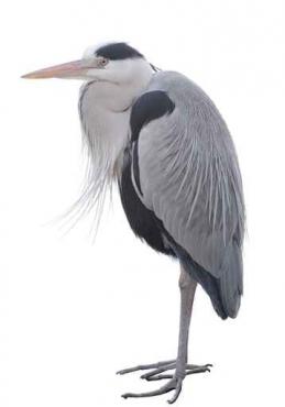Fototapety ZWIERZĘTA ptaki 7968