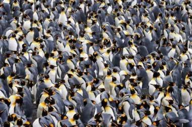 Fototapety ZWIERZĘTA ptaki 7969
