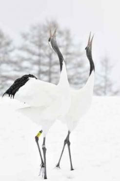 Fototapety ZWIERZĘTA ptaki 7970