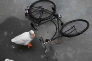 Fototapety ULICZKI rowery 8525 mini