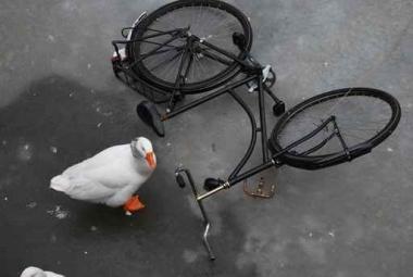 Fototapety ULICZKI rowery 8525