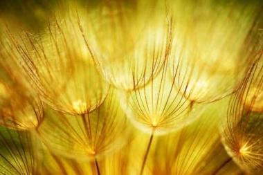 Fototapety KWIATY żółte 8601