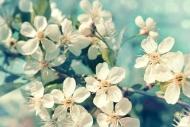 Fototapety KWIATY białe 8611 mini