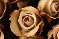 Fototapety KWIATY białe 8671 mini