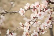 Fototapety KWIATY białe 8672 mini
