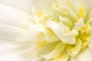 Fototapety KWIATY białe 8674 mini