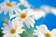 Fototapety KWIATY białe 8682 mini