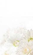 Fototapety KWIATY białe 8729 mini
