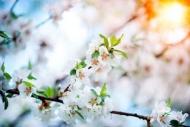 Fototapety KWIATY białe 8735 mini