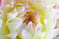 Fototapety KWIATY białe 8755 mini