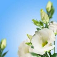 Fototapety KWIATY białe 8771 mini