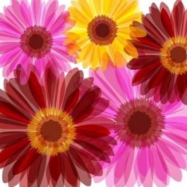 Fototapety KWIATY kolorowe 8813
