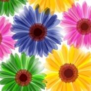 Fototapety KWIATY kolorowe 8814 mini