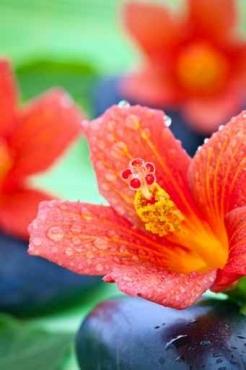 Fototapety KWIATY kolorowe 8825
