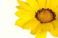 Fototapety KWIATY żółte 9063 mini