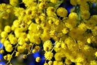 Fototapety KWIATY żółte 9076 mini