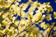 Fototapety KWIATY żółte 9083 mini