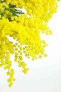 Fototapety KWIATY żółte 9097 mini