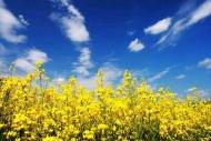 Fototapety KWIATY żółte 9118 mini