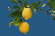 Fototapety DO KUCHNI owocowy koktajl 9451 mini
