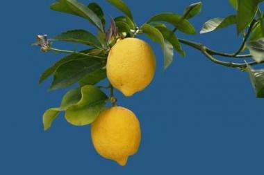 Fototapety DO KUCHNI owocowy koktajl 9451