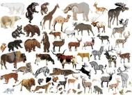 Fototapety ZWIERZĘTA INACZEJ zwierzęta inaczej 9658 mini