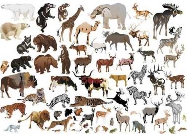Fototapety ZWIERZĘTA INACZEJ zwierzęta inaczej 9658