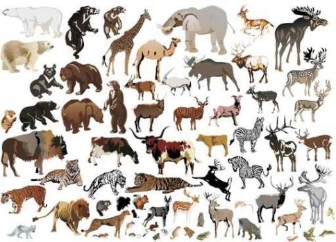 Fototapety ZWIERZĘTA INACZEJ zwierzęta inaczej 9658-big