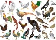 Fototapety ZWIERZĘTA INACZEJ zwierzęta inaczej 9671 mini