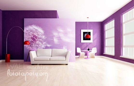 galeria KWIATY dmuchawce